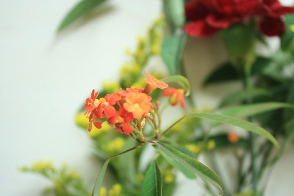 bloomon_katimakeit_-14