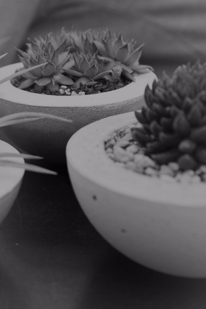 Sukkulenten und Luftpflanzen in Beton-Elementen