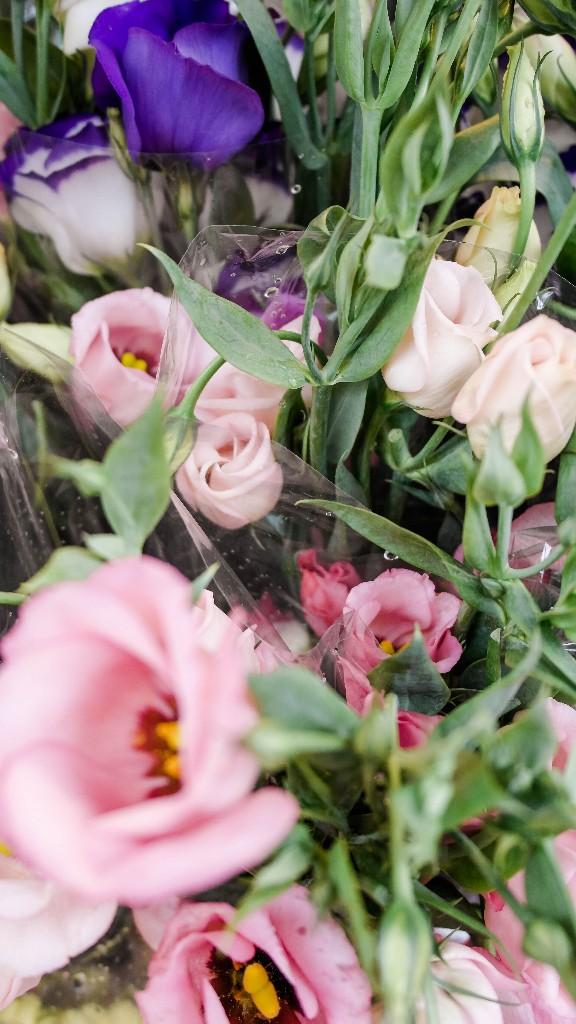 wundervolle Blumen an jeder Ecke in Antwerpen